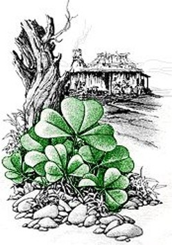 Shamrock in the Bush