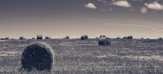 Rolls of gathered hay on the lands - High Contrast Black and White (browntone)