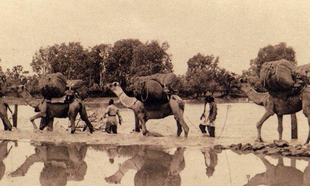 Highlight: Australia's Muslim Cameleers: Pioneers of the Inland 1860s-1930s